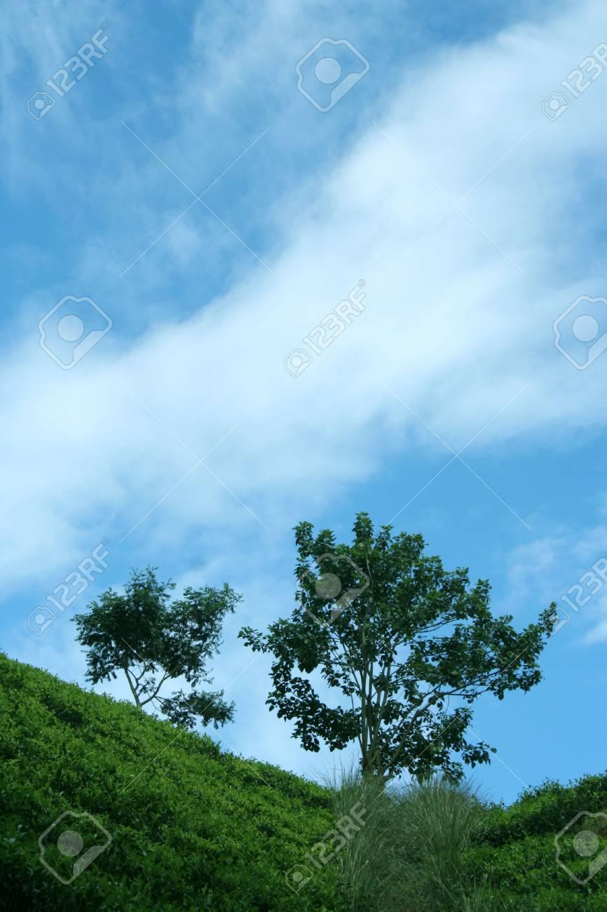 Tea plantations in Sri Lanka Stock Photo - 712735