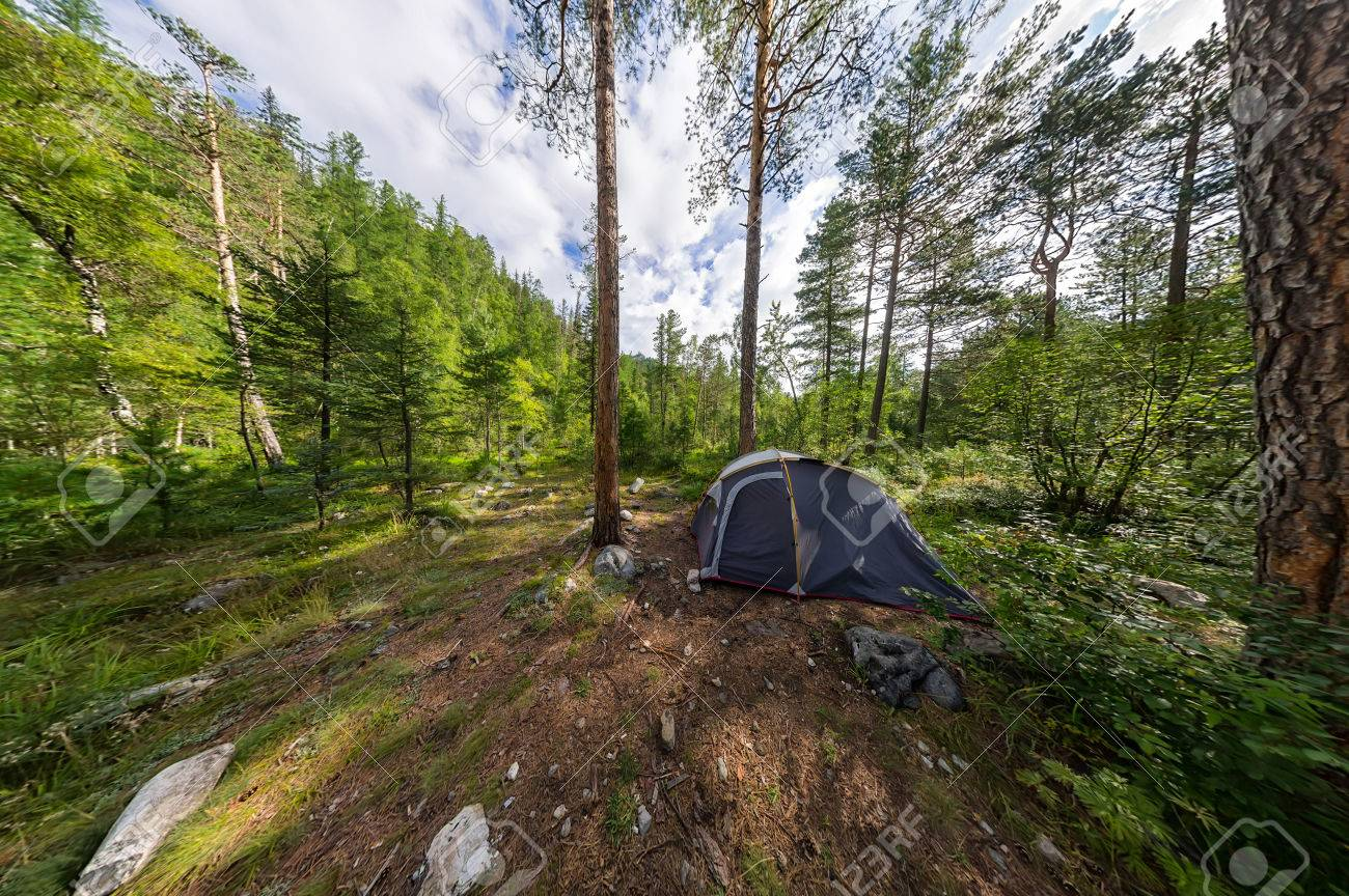 Wide panorama tent on c&ing in the woods. Stock Photo - 80878146 & Wide Panorama Tent On Camping In The Woods. Stock Photo Picture ...
