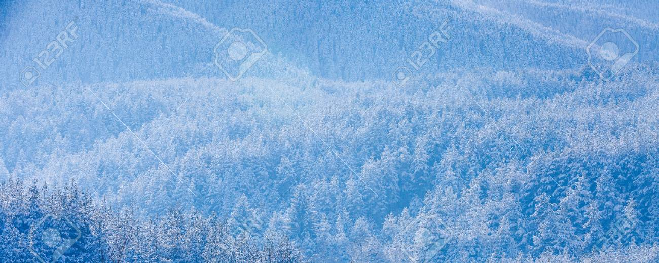 Texture winter mountain vacation panoramic background with pine texture winter mountain vacation panoramic background with pine trees covered by heavy snow with copy space voltagebd Choice Image
