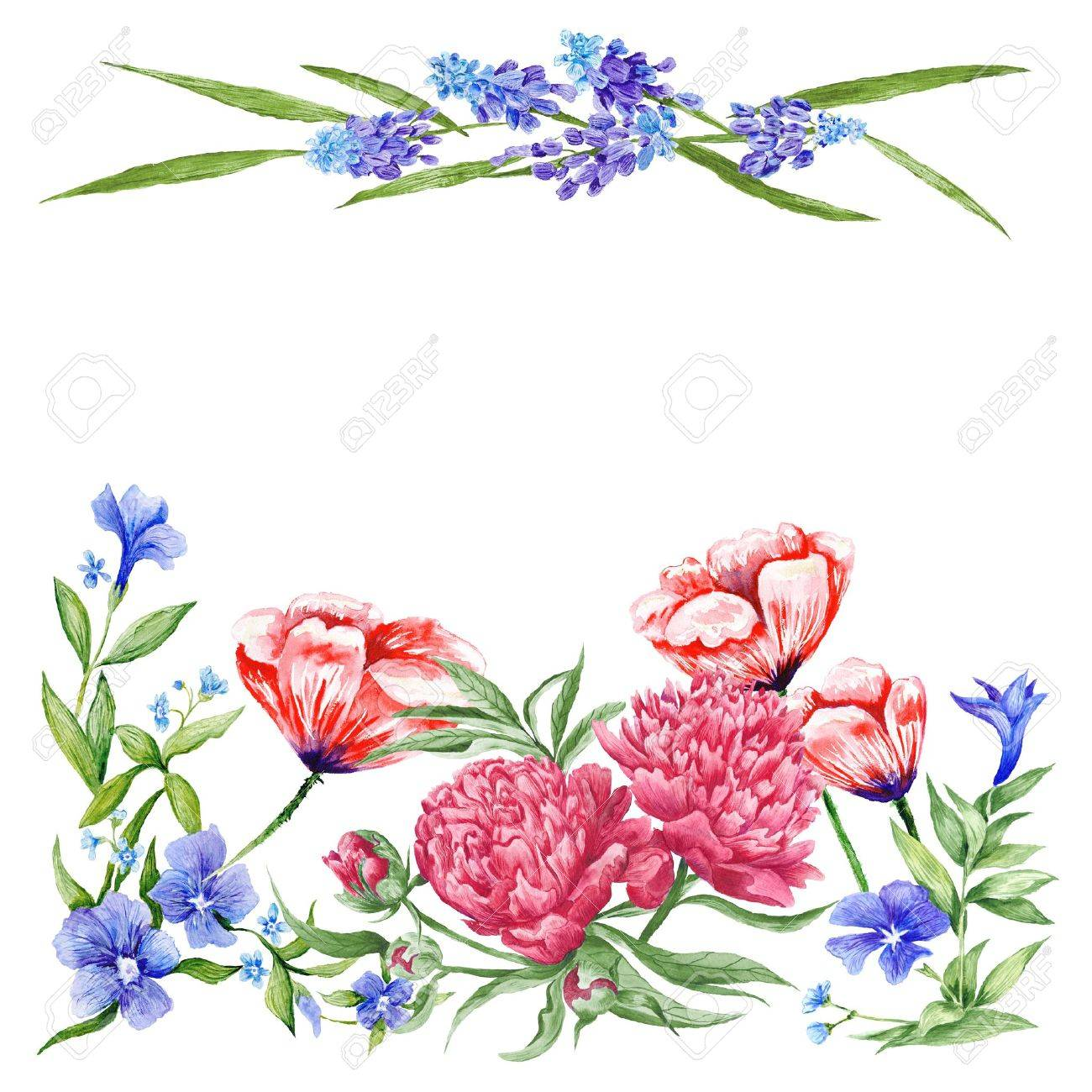 Elegante Romantische Ornamente Mit Mohnblume Pfingstrose Muskari