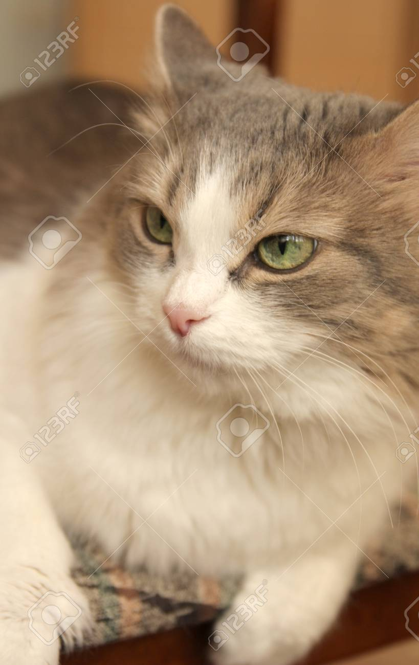 Pretty cat on the blurred background - 29787714