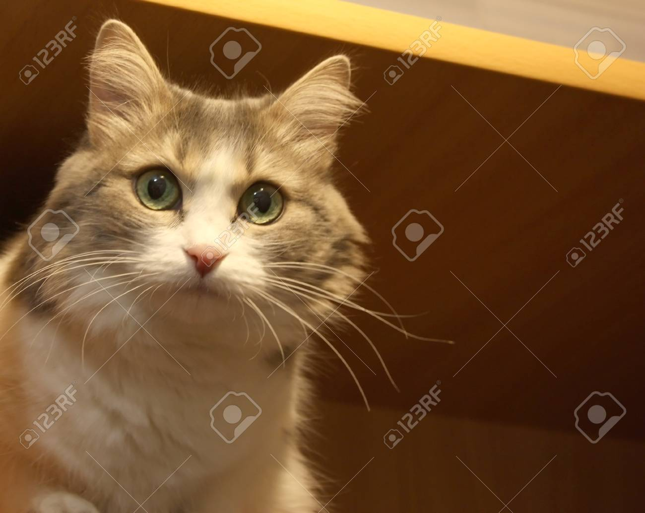 Pretty cat on the blurred background - 29787776
