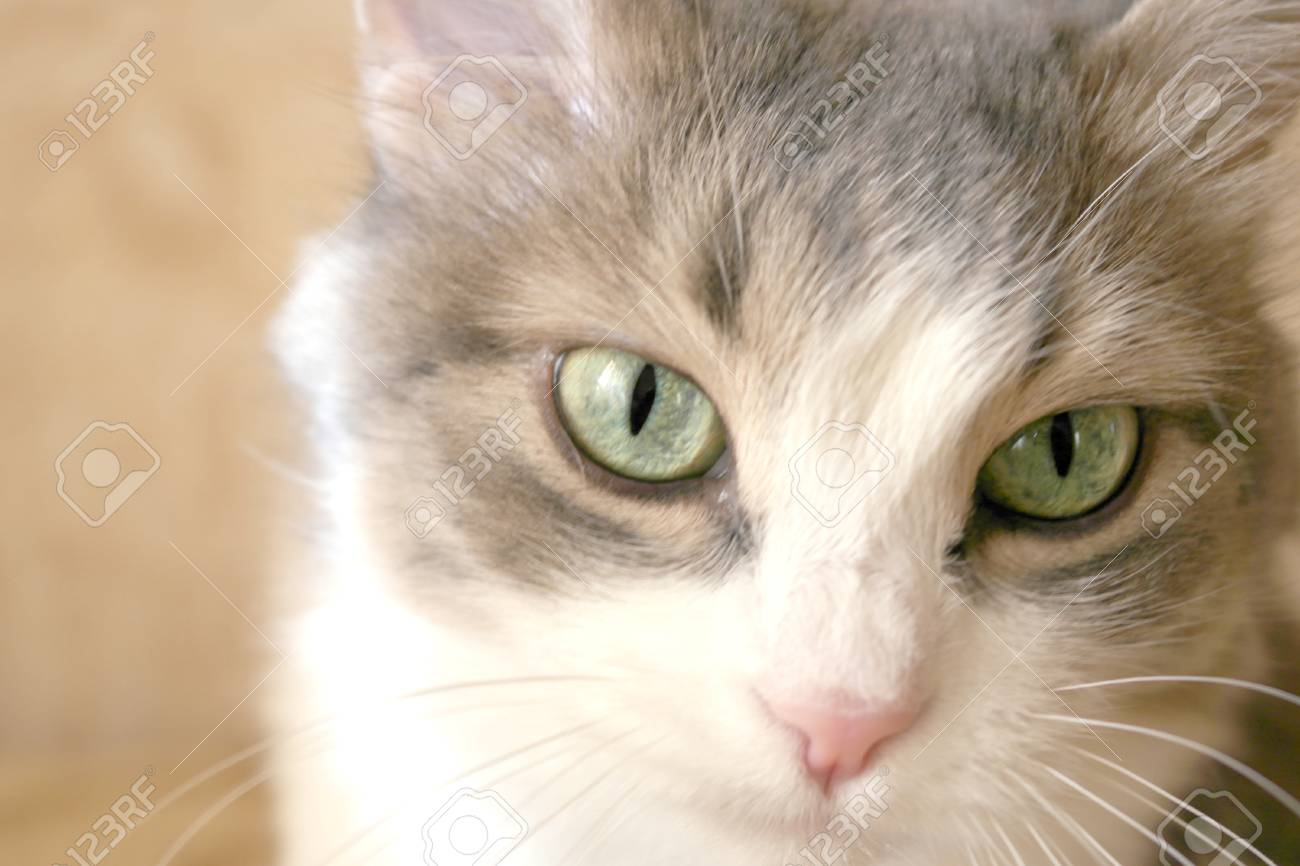 Pretty cat on the light background - 29787783