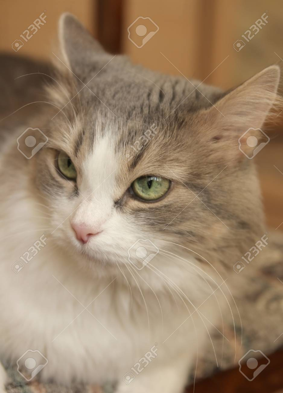 Pretty Cat The Blurred Background Stock Picture And