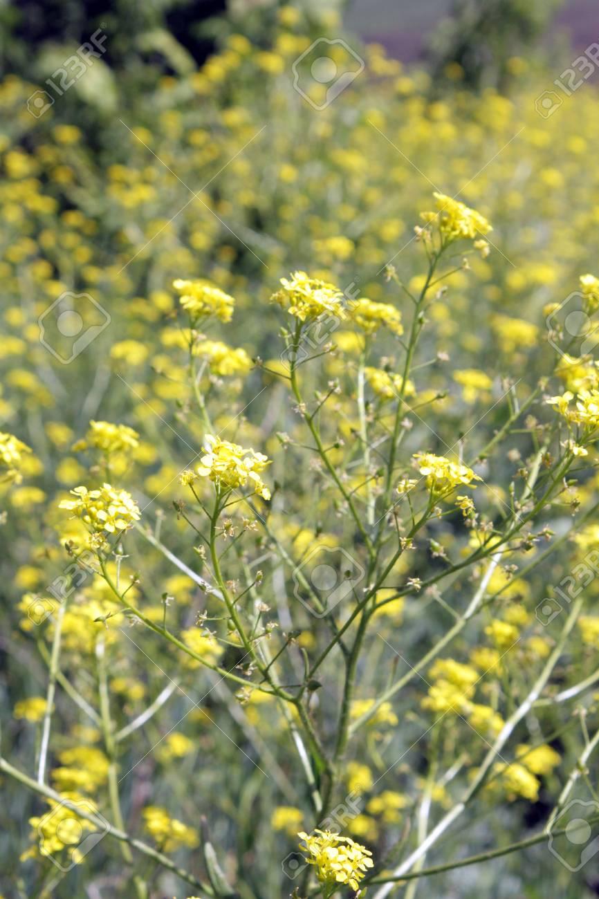Yellow blossom flowers, shallow DOF - 29788426