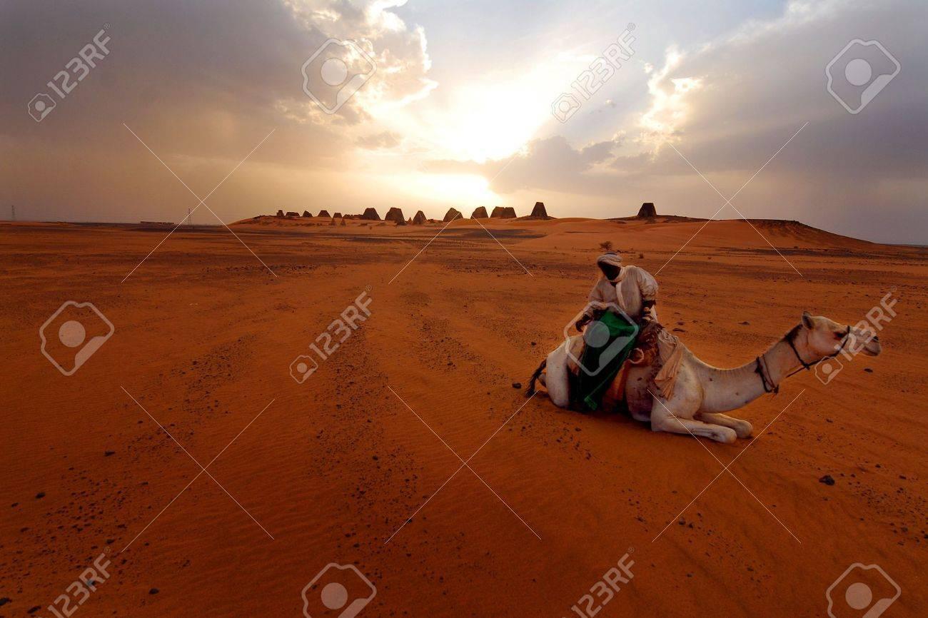 camel in the desert - 7606564