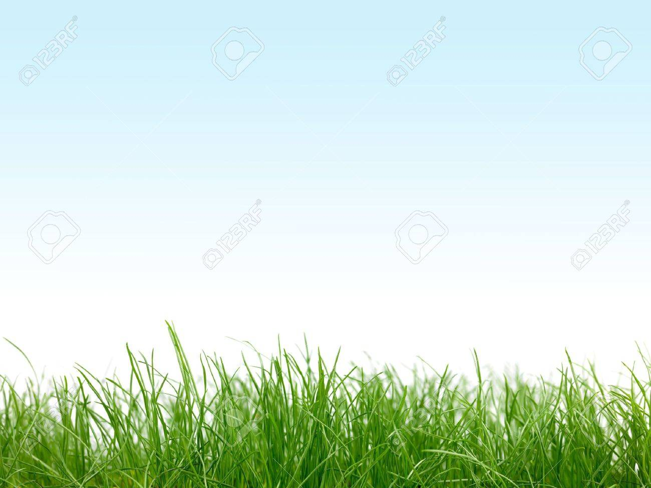 Green grass isolated against a blue sky Stock Photo - 9301622