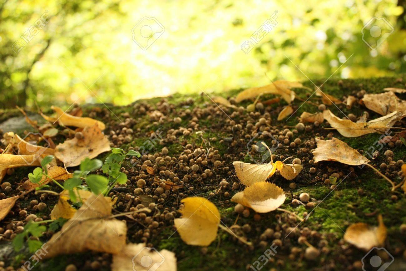 Autumn Gold Leaves on Old Overgrown Stone Stock Photo - 5347528