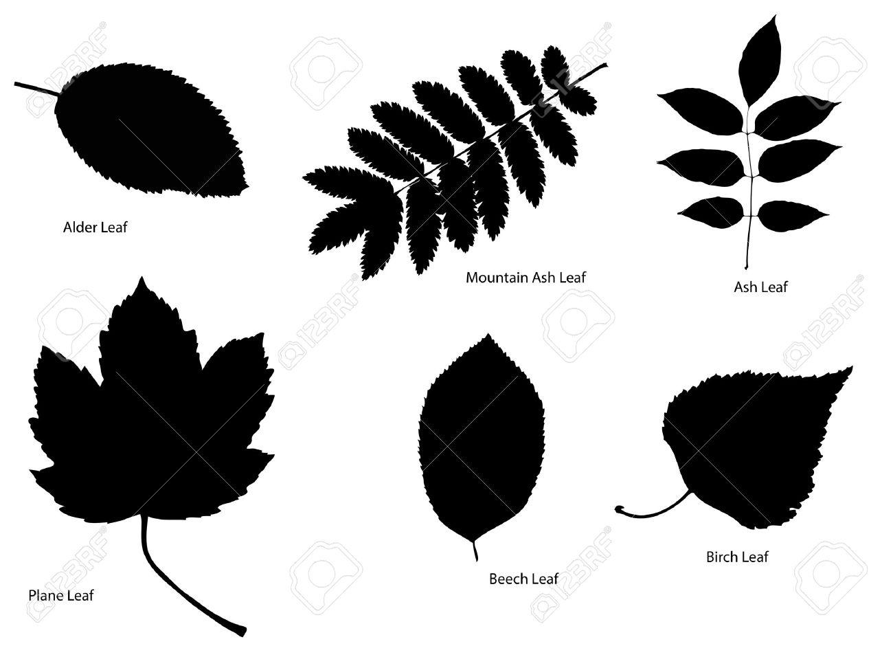 Tree Leaf Silhouettes