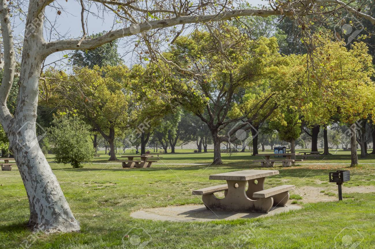 Chair And Tree Around Santa Fe Dam Recreation Area Los Angeles Stock Photo Picture And Royalty Free Image Image 74728124