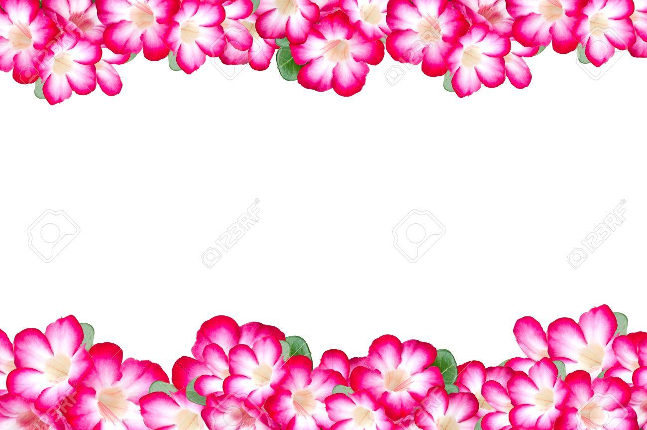 flowers frame border Stock Photo - 17066336
