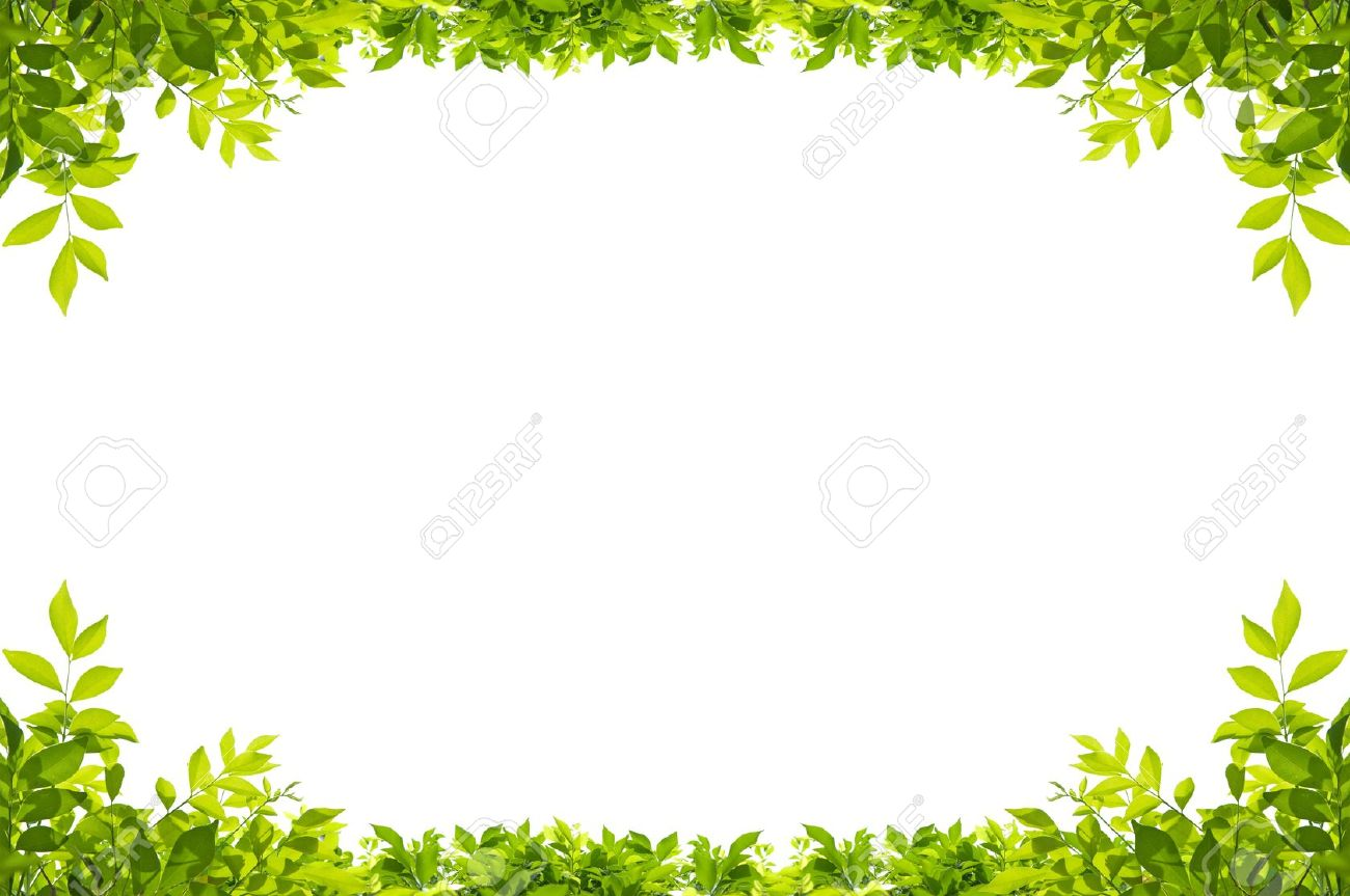 Leaves Frame Isolated On White Background Stock Photo