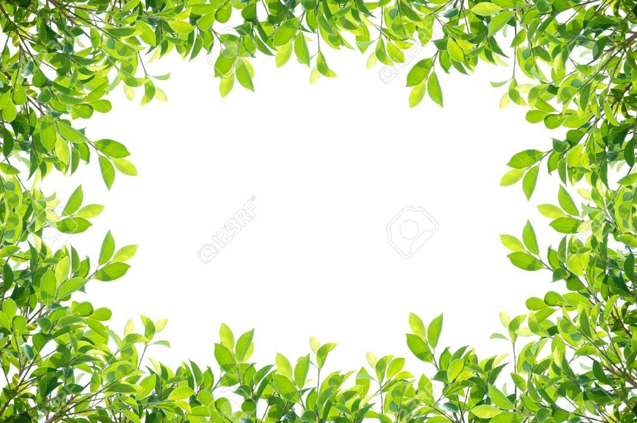 leaves frame isolated on white background Stock Photo - 17964942