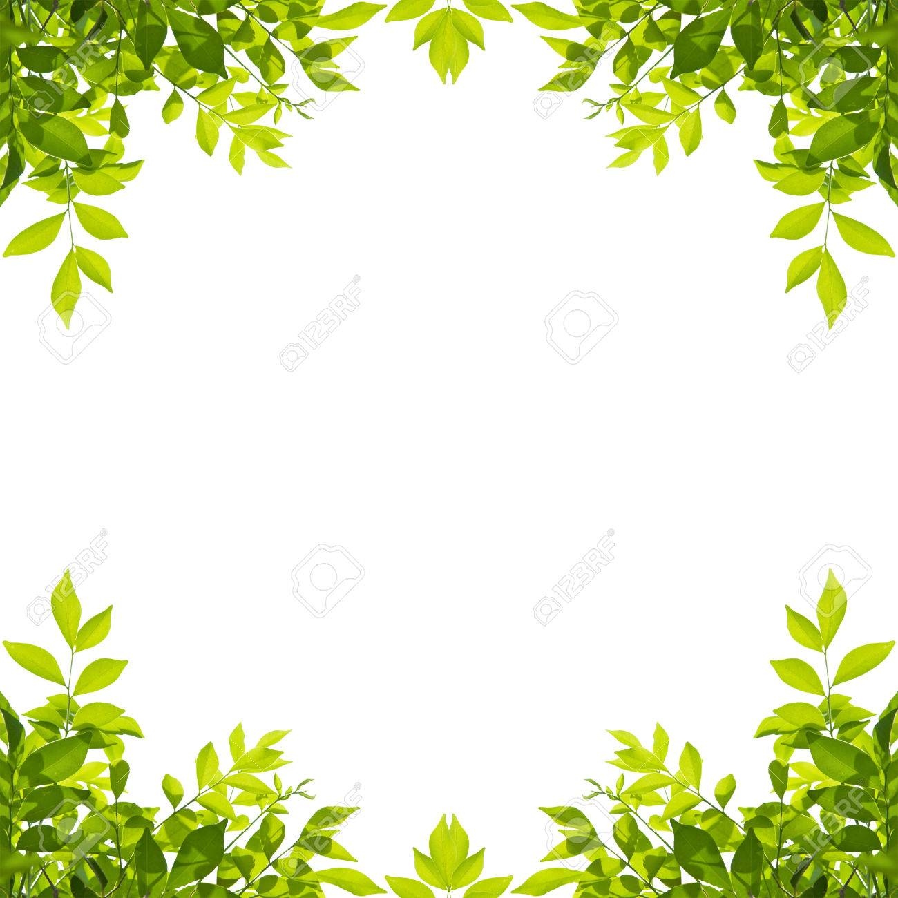 Green leaf border isolated on white background. Clipping paths included. - 72952930