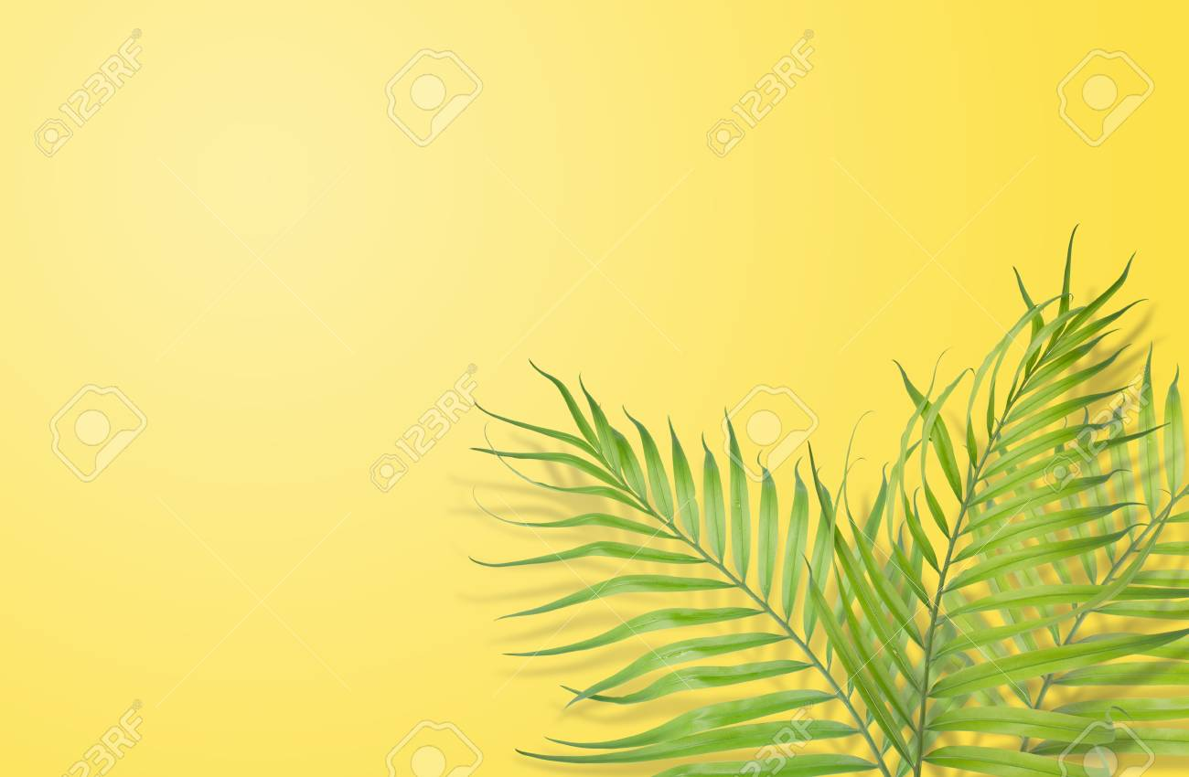 Tropical Palm Leaves On Yellow Background Minimal Nature Summer Stock Photo Picture And Royalty Free Image Image 83829455 60pcs tropical party decorations supplies tropical palm leaves hibiscus flowers simulation artificial leaf for hawaiian tropical party decoration supplies 8 tropical palm monstera leaves. tropical palm leaves on yellow background minimal nature summer