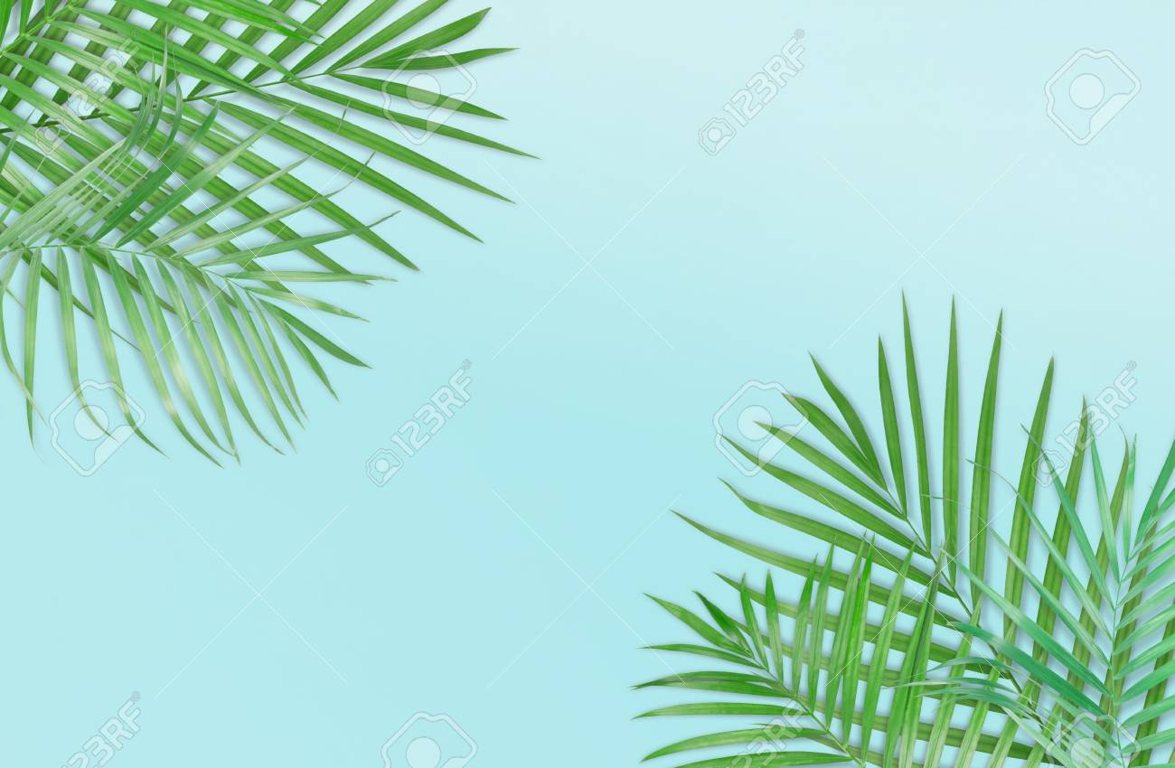 Tropical Palm Leaves On Light Blue Background Minimal Nature Stock Photo Picture And Royalty Free Image Image 87752854 Support us by sharing the content, upvoting wallpapers on the page or sending your own. tropical palm leaves on light blue background minimal nature