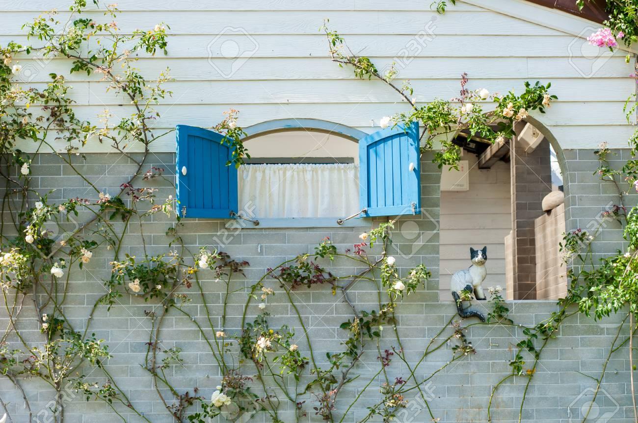 Plante Sur Les Murs fenêtre fermée et un mur recouvert de plante