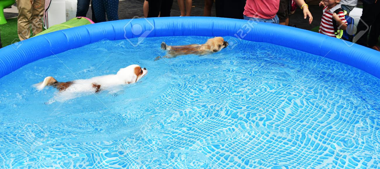 Couple Dogs swimming in training pool