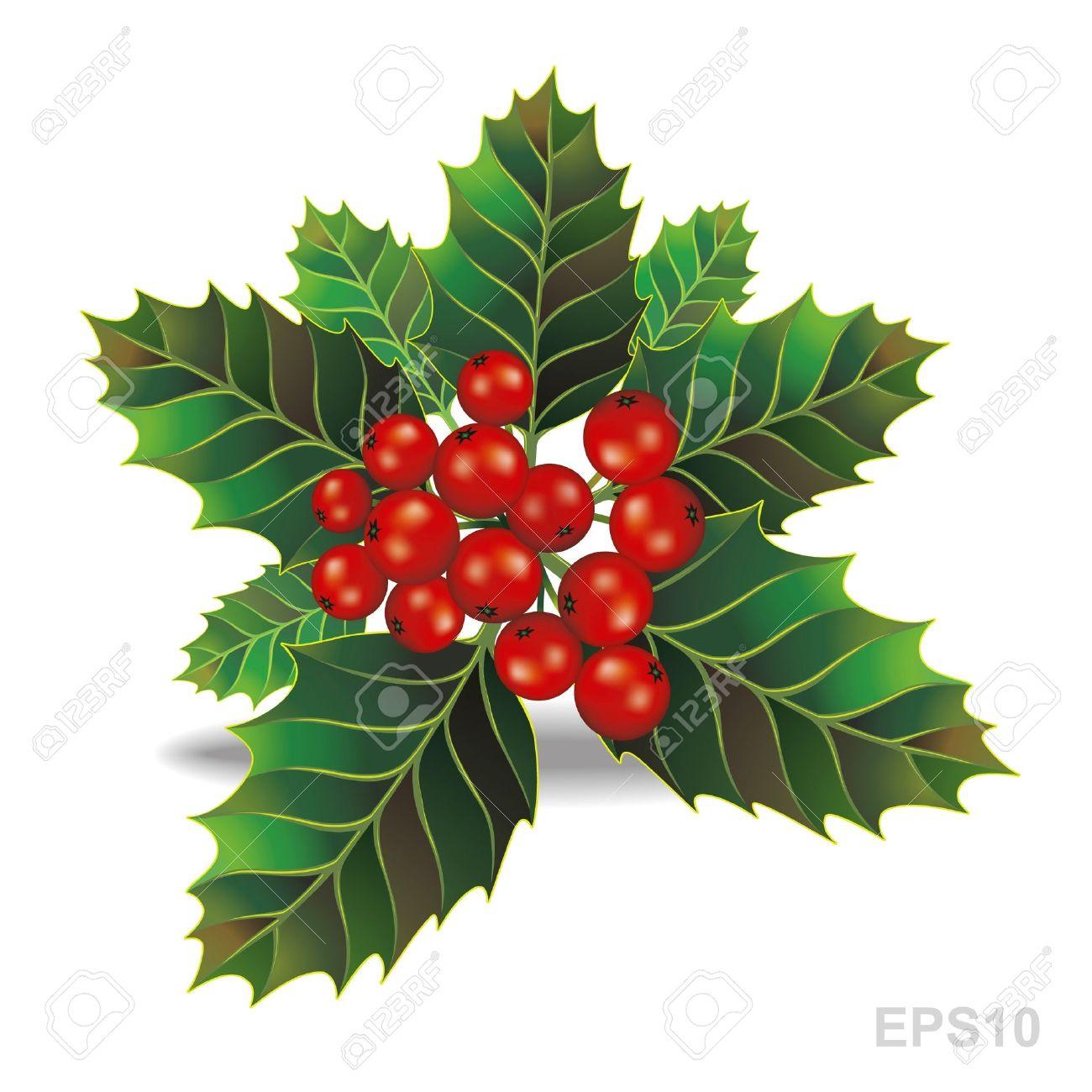 Christmas Branch Vector.Beautiful Holly Christmas Branch Vector