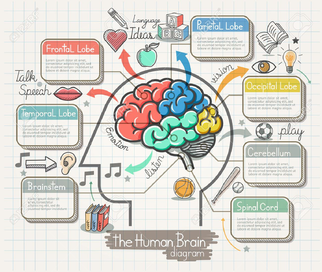 The Human Brain Diagram Doodles Icons Set. Illustration. - 50958313