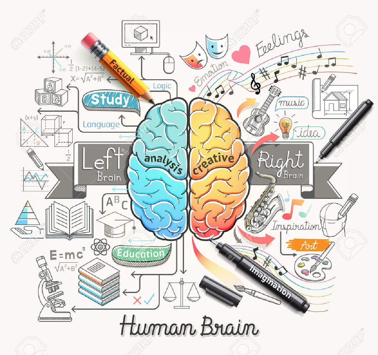 Human Brain Diagram Doodles Icons Style. Vector Illustration ...