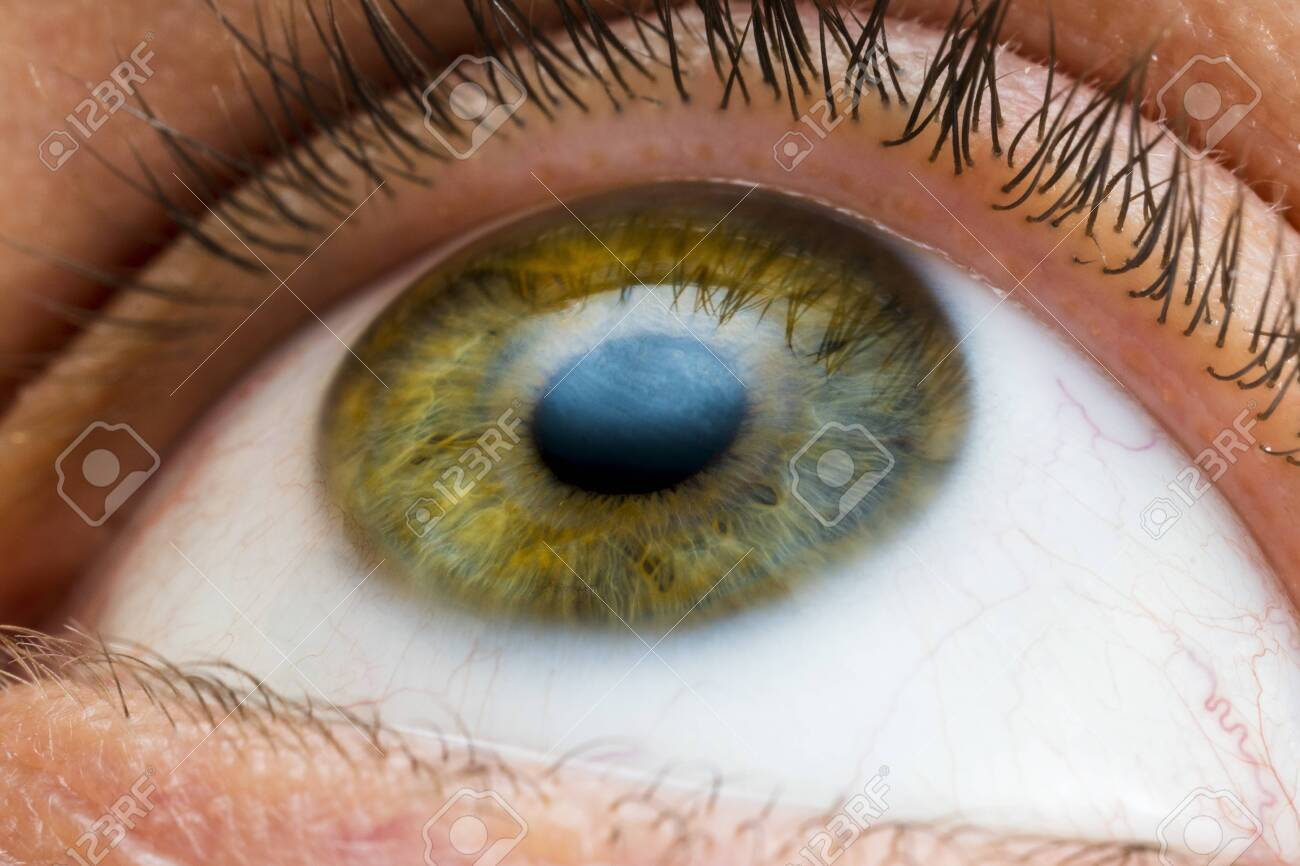 male eye of yellow, green and some blue colors close-up - 140125861