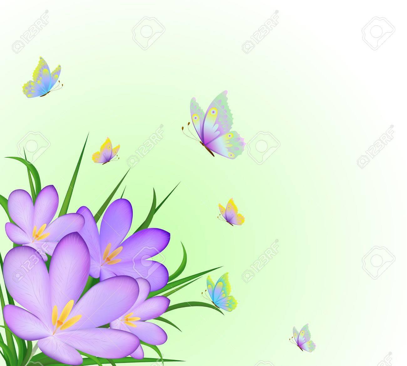 Illustration of crocus and flying butterflies Stock Vector - 10790072