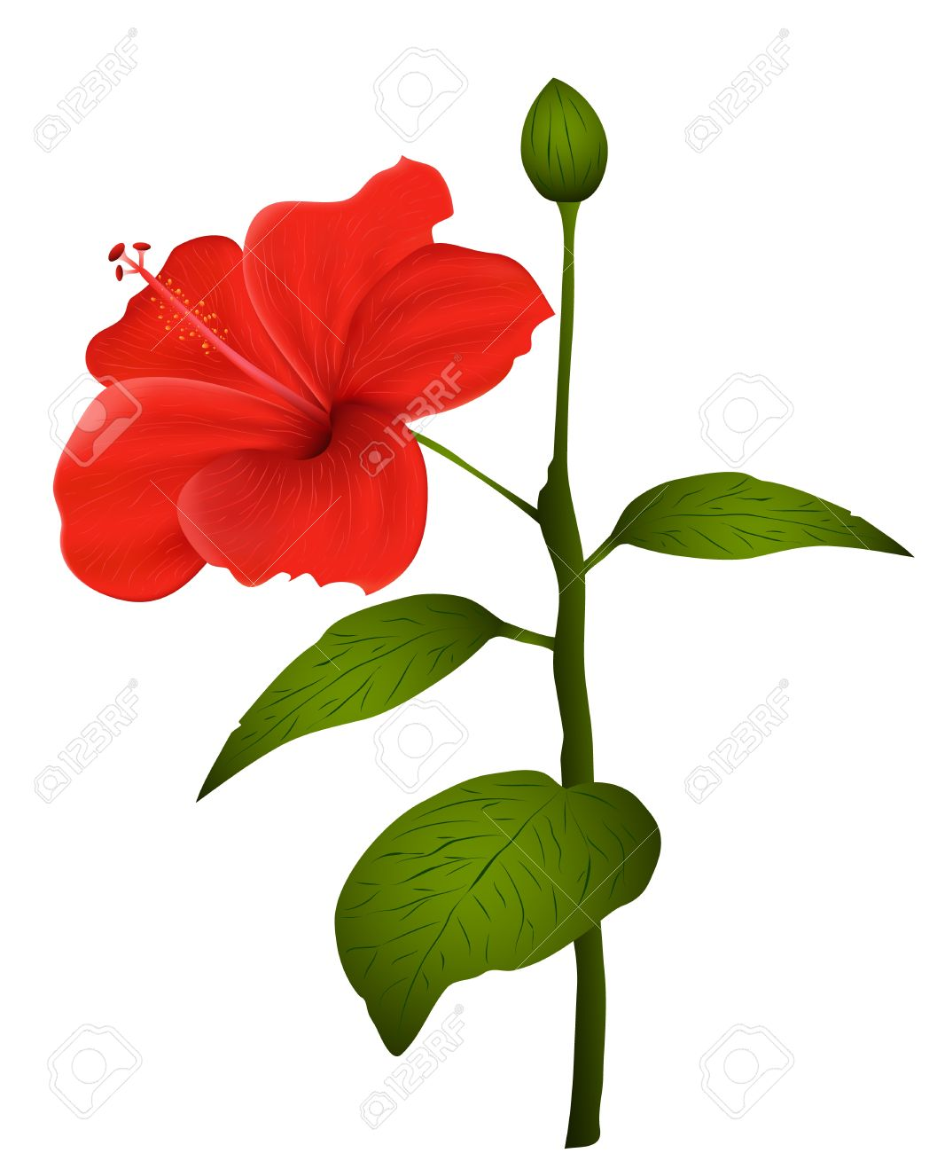 Illustration of  hibiscus isolated on white background Stock Vector - 10790065