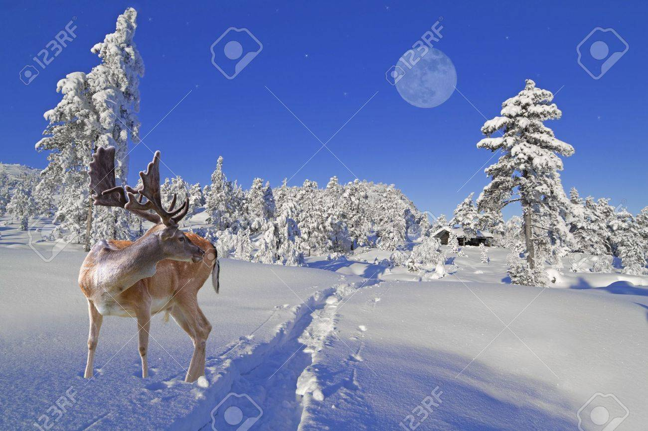 a reindeer is waiting for santa at the north pole stock photo 7606691 - Santa In The North Pole