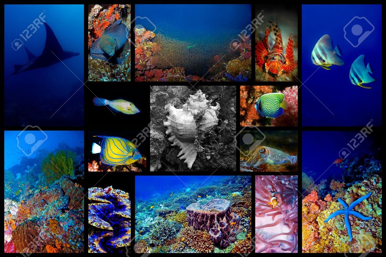 Collage of the colorful underwater life in Asia Stock Photo - 9243254