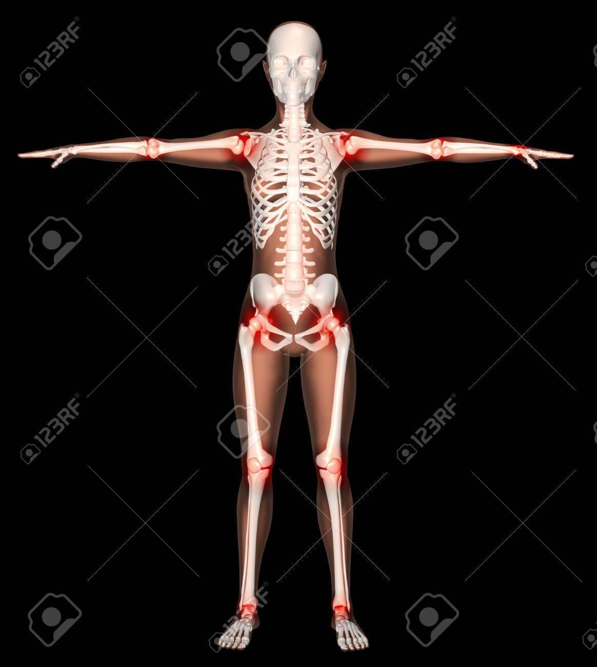 3D render of a female skeleton with main joints highlighted Stock Photo - 9579846