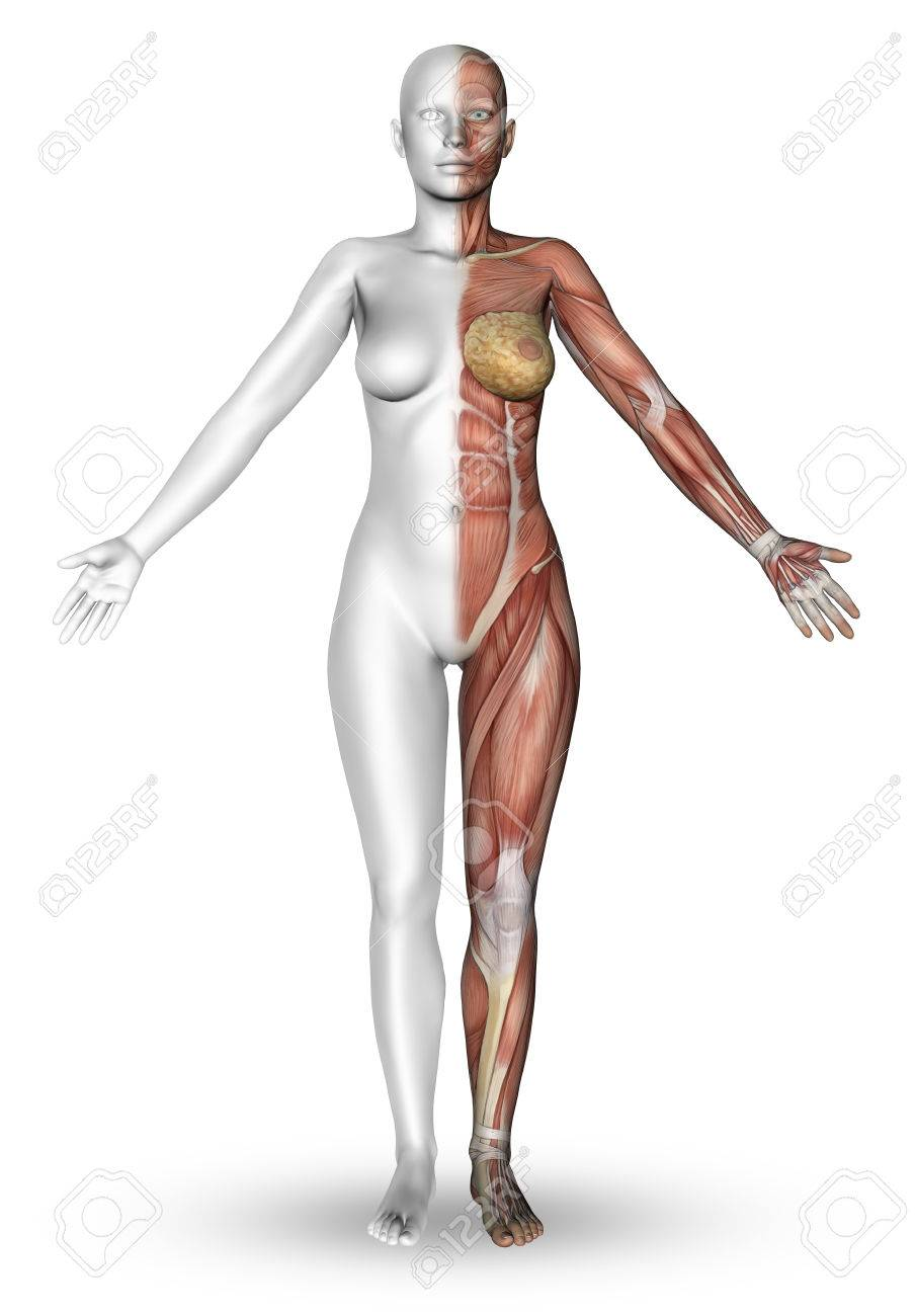 3D Render Of A Female Figure With Half The Body Showing The Muscle ...