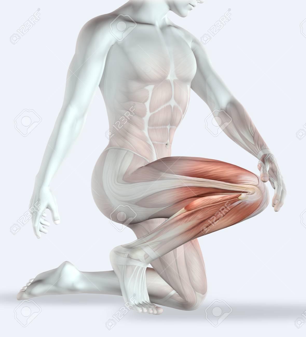 Ausgezeichnet Scm Muskel Ideen - Physiologie Von Menschlichen ...