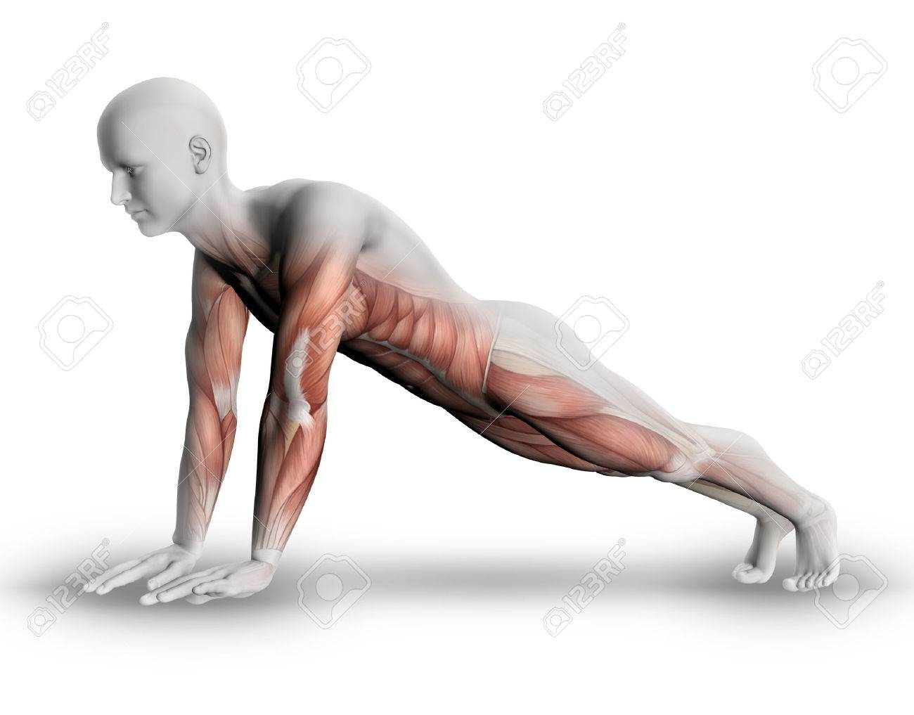 3d Male Medical Figure With Partial Muscle Map In Yoga Pose Stock