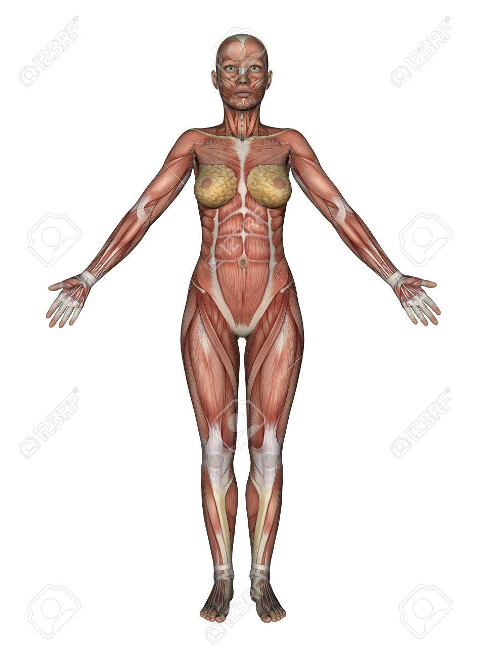 3D Render Of A Female Figure With Smooth Skin In Standing Pose Stock ...
