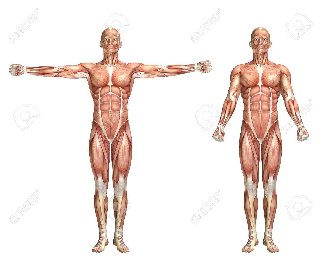 3D Render De Una Figura Médica Mostrando Scaption Hombro Fotos ...