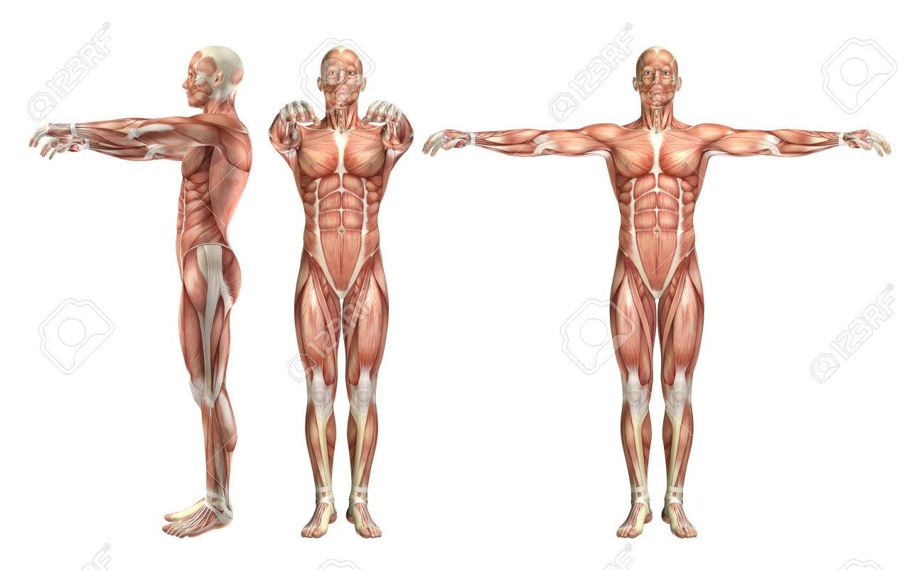 3D Render Of A Medical Figure Showing Shoulder Abduction And.. Stock ...