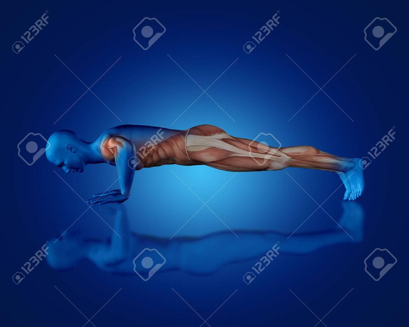 3D Rinden De Una Figura Médica Azul Con Un Mapa Parcial Del Músculo ...