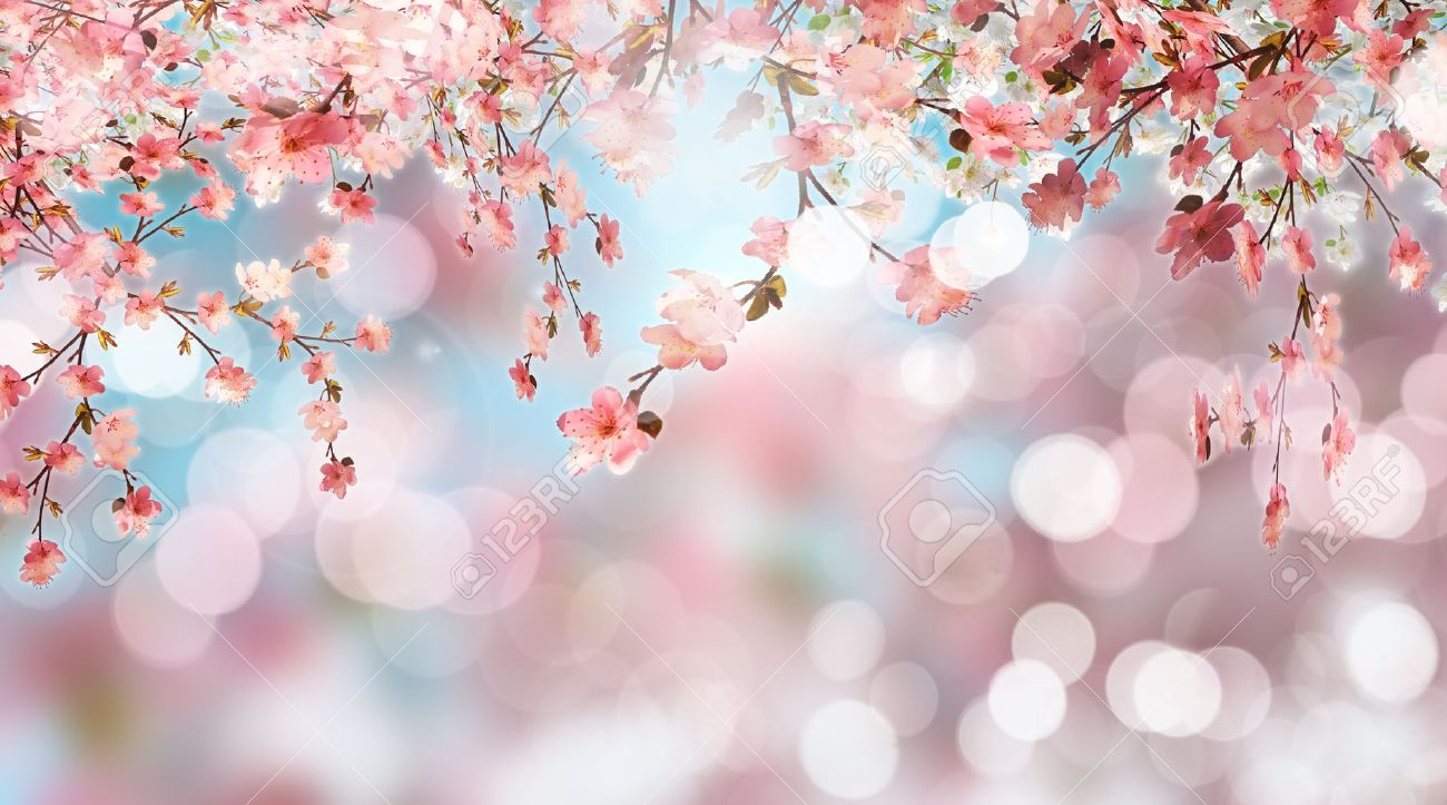 7baffee5c 3D render of cherry blossom on a defocussed background Stock Photo -  61088158