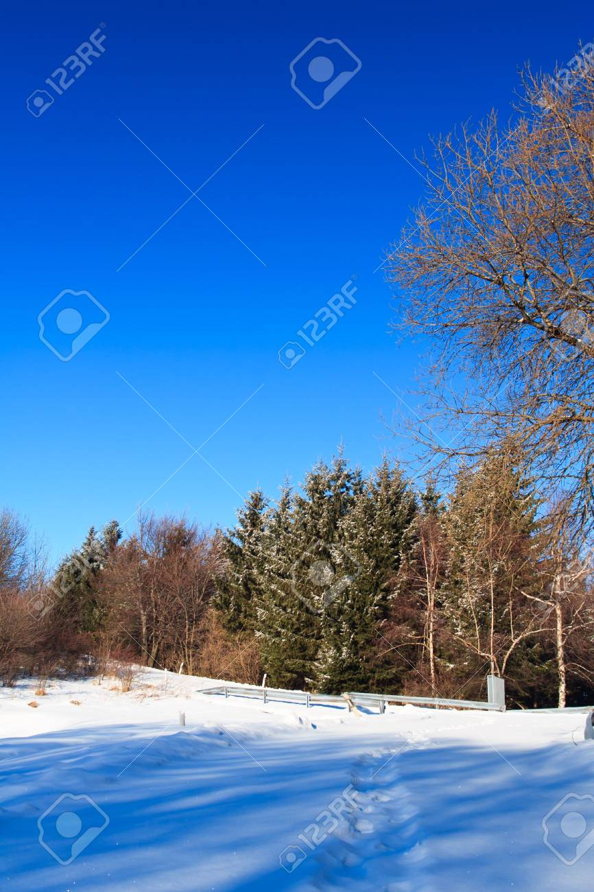 snowy forest with blue sky by sunshine Stock Photo - 7331597
