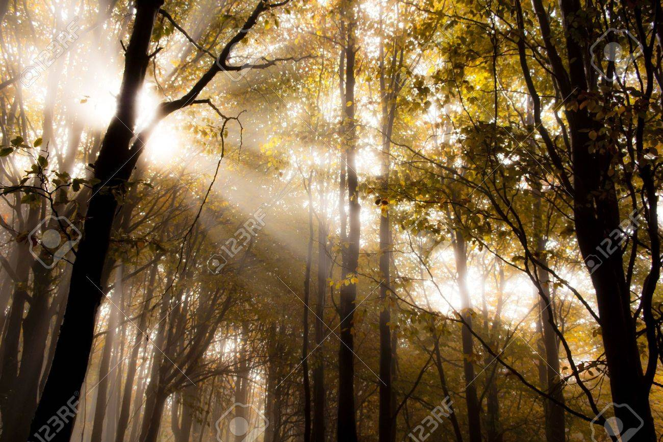 Sunrise in a forest in autumn Stock Photo - 7531377