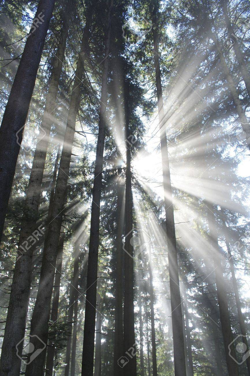 dark forest with sun and sun beam Stock Photo - 7978567