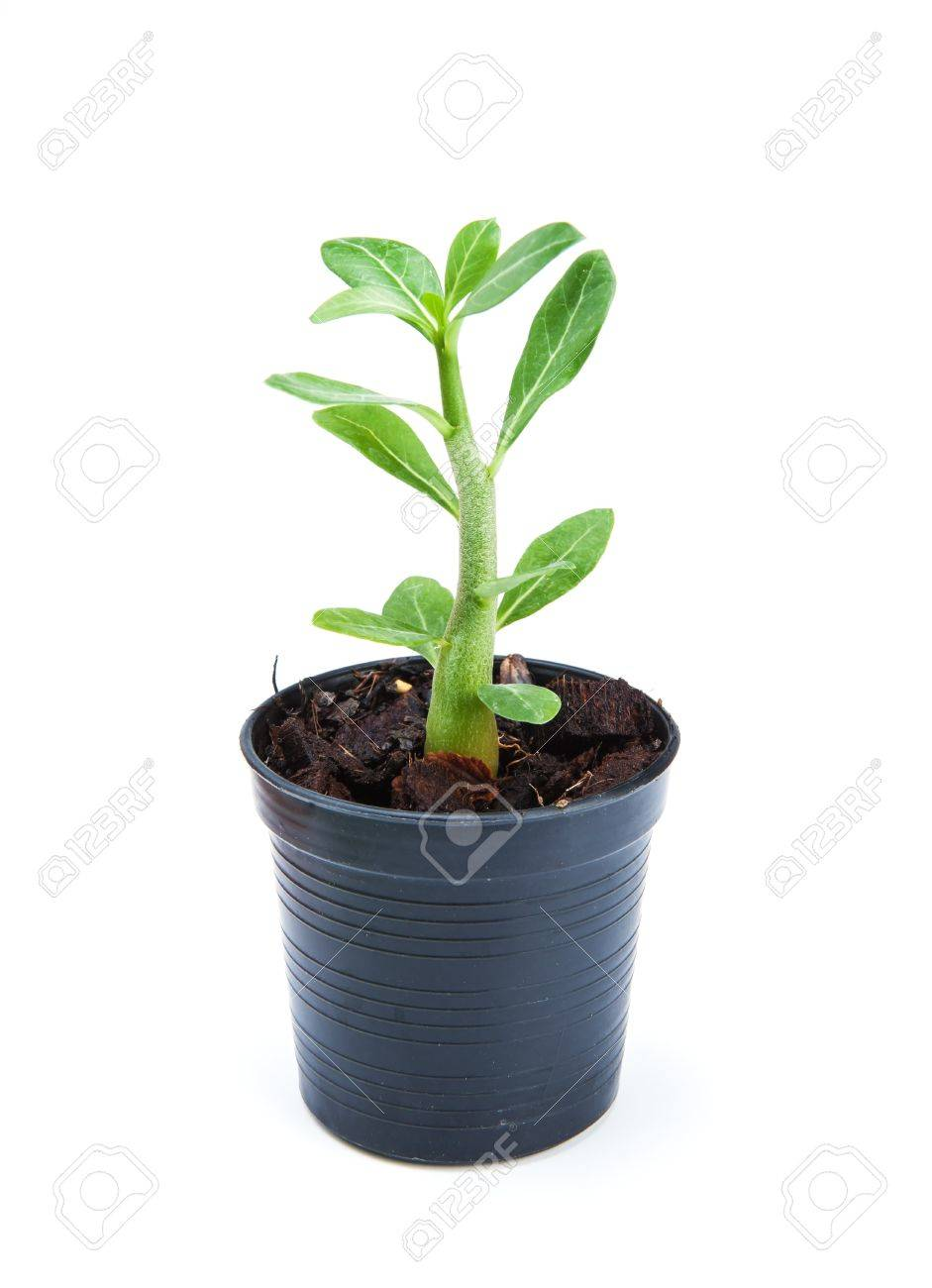small ornamental plants in flowerpot on white background stock
