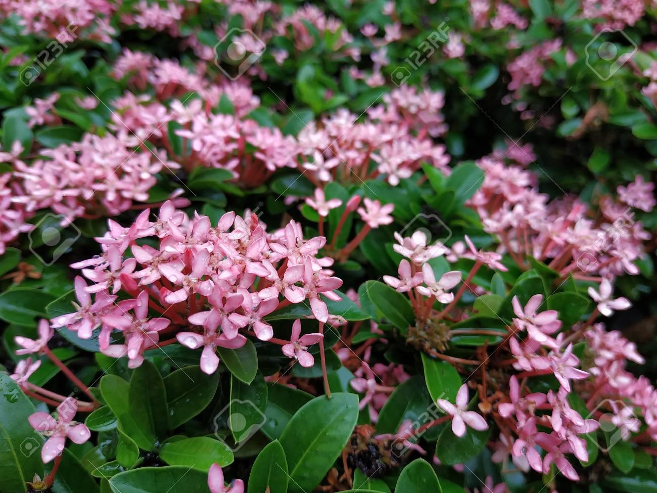 Selective Focus Of Pink Spike Flower Banque Dimages Et Photos