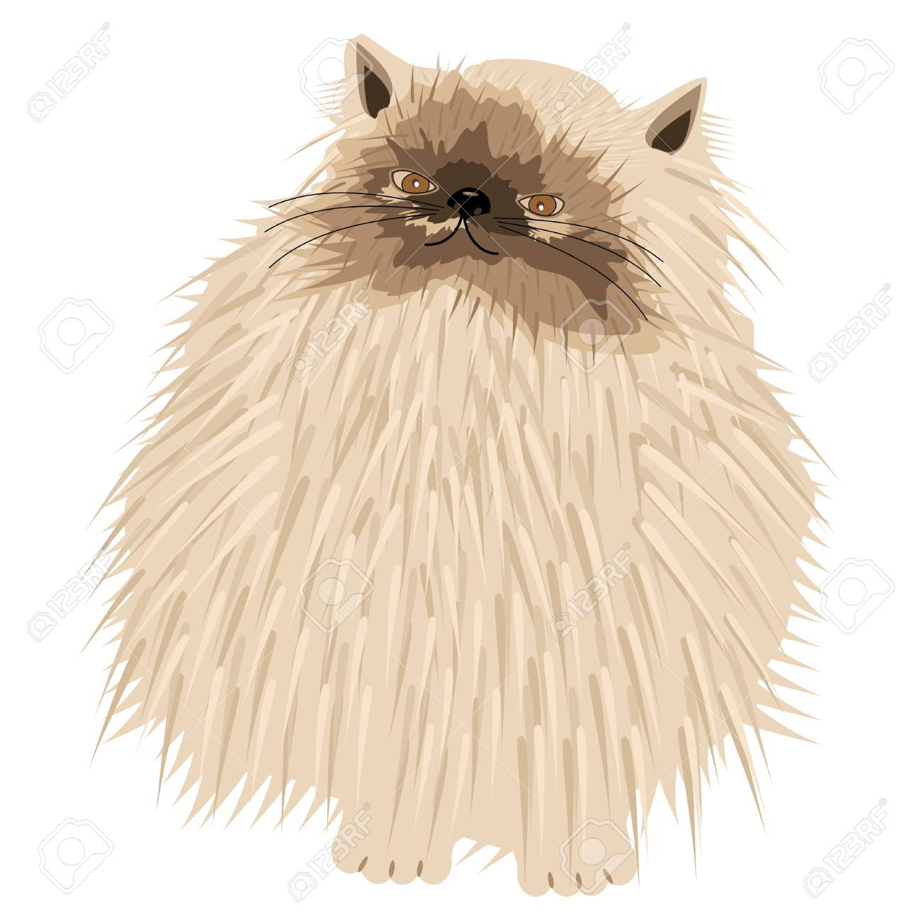 persian cat on white background Stock Vector - 12364189