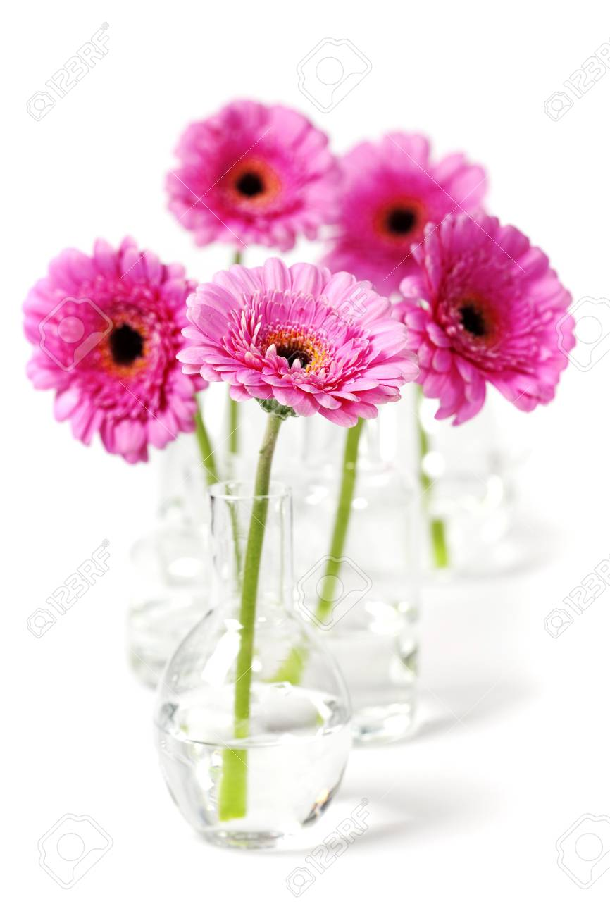 colorful pink daisy gerbera flowers in vases stock photo, picturecolorful pink daisy gerbera flowers in vases stock photo 11878670