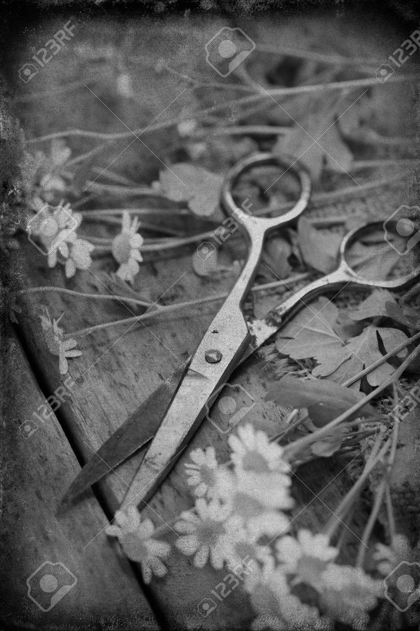 vintage paper textures with garden flowers and old antique scissors Stock Photo - 15882225