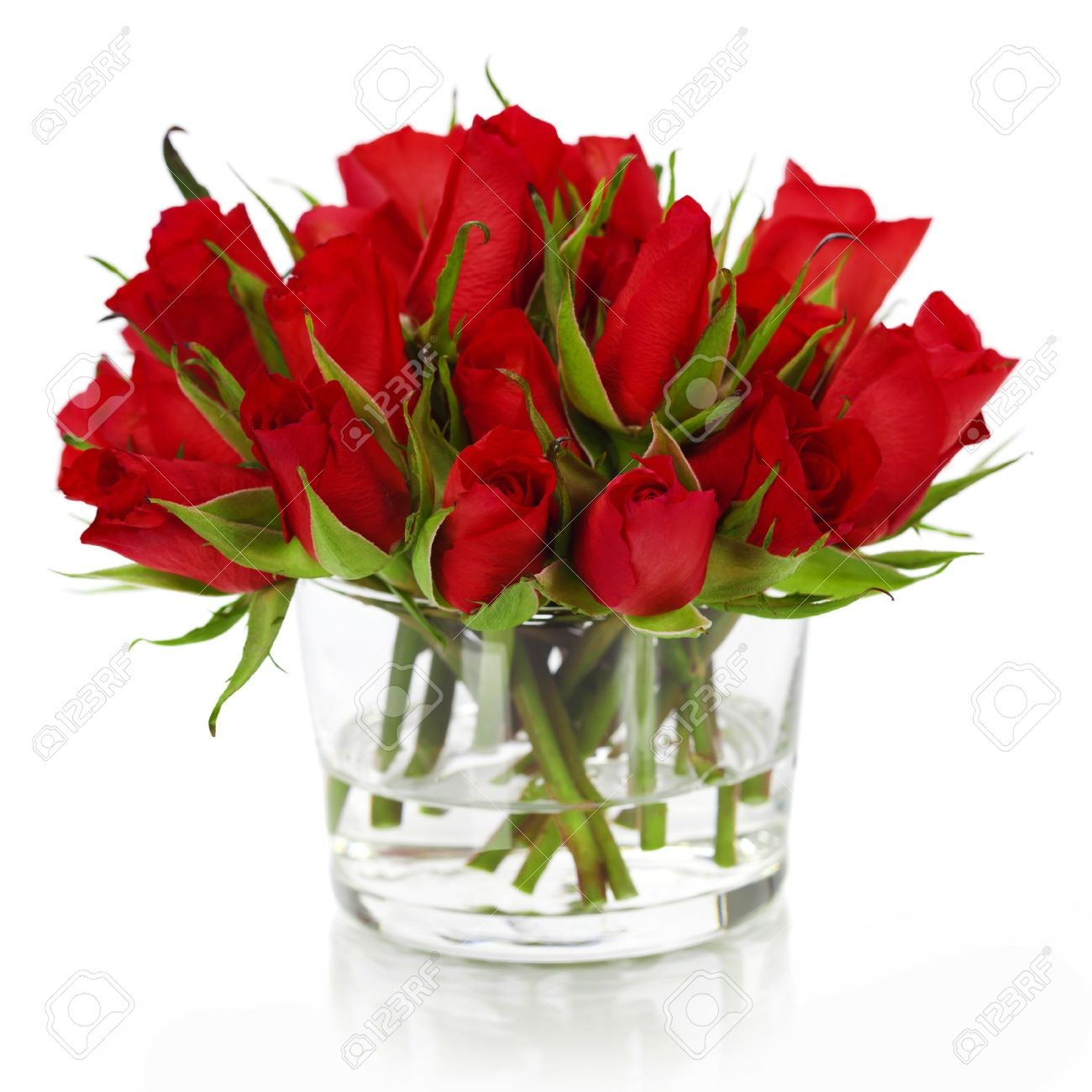 beautiful red roses in a vase isolated on white stock photo, Beautiful flower