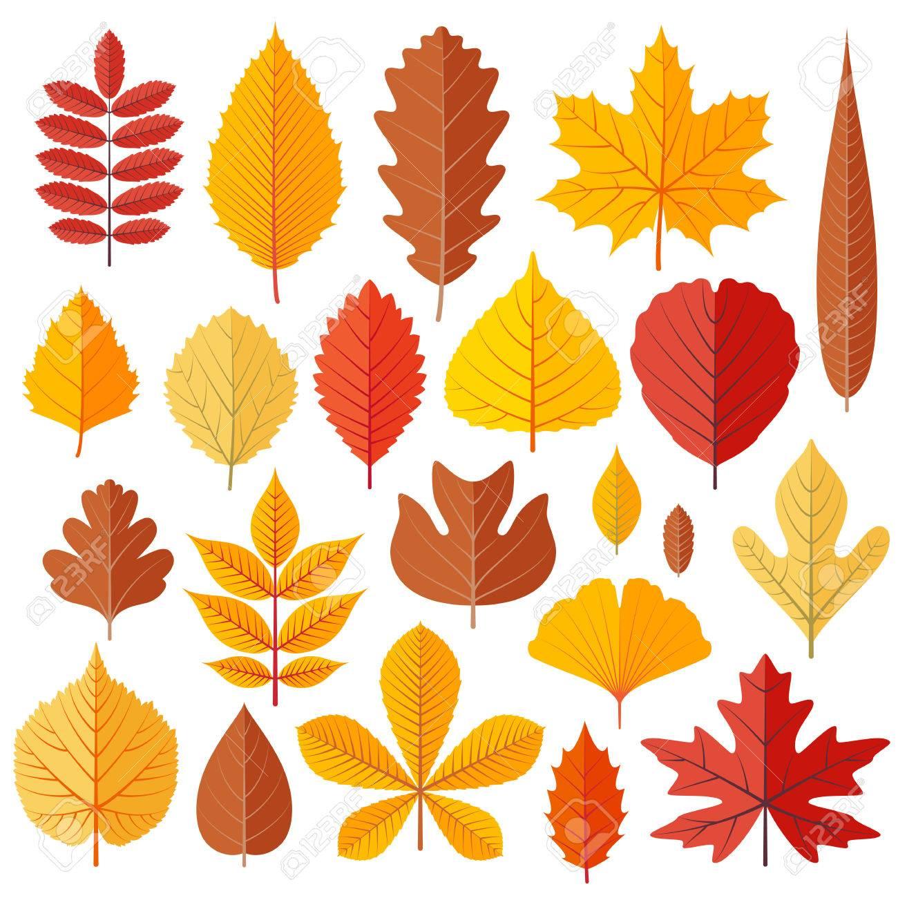 set of tree autumn leaves isolated on the white cartoon vector rh 123rf com cartoon leaves texture cartoon leaves wind