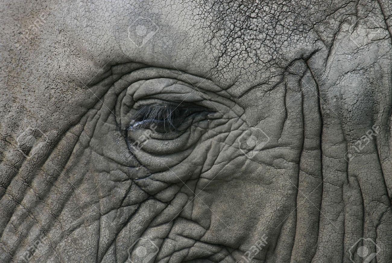 eye of african elephant Stock Photo - 6860770